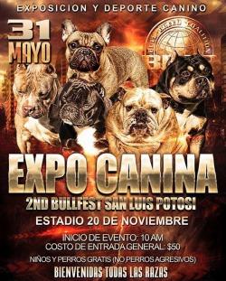 expo-canina-poster